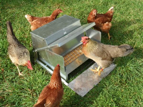 Grandpa's Feeders Automatic Chicken Feeders